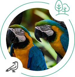 birds, costa rica, oiseaux, touirsme durable, sustainable tourism